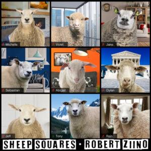 Sheep Squares